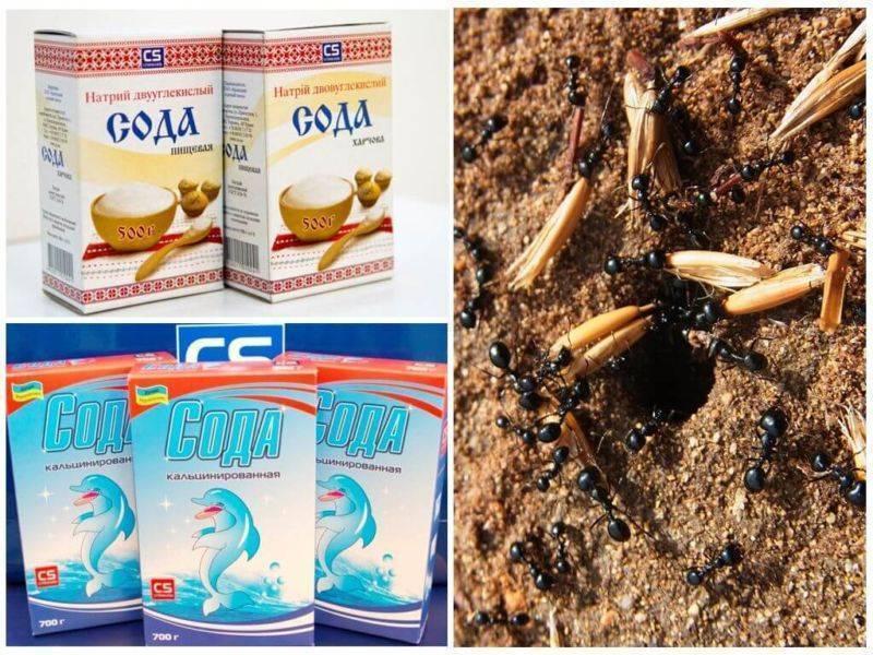 Сода — отличное средство для борьбы с муравьями! инструкция по применению