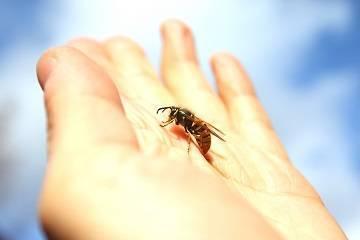 Аллергия на комаров — симптомы и лечение у детей и взрослых