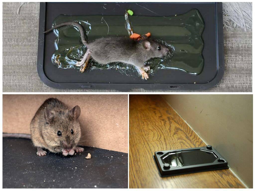 7 способов борьбы с мышами в частном доме