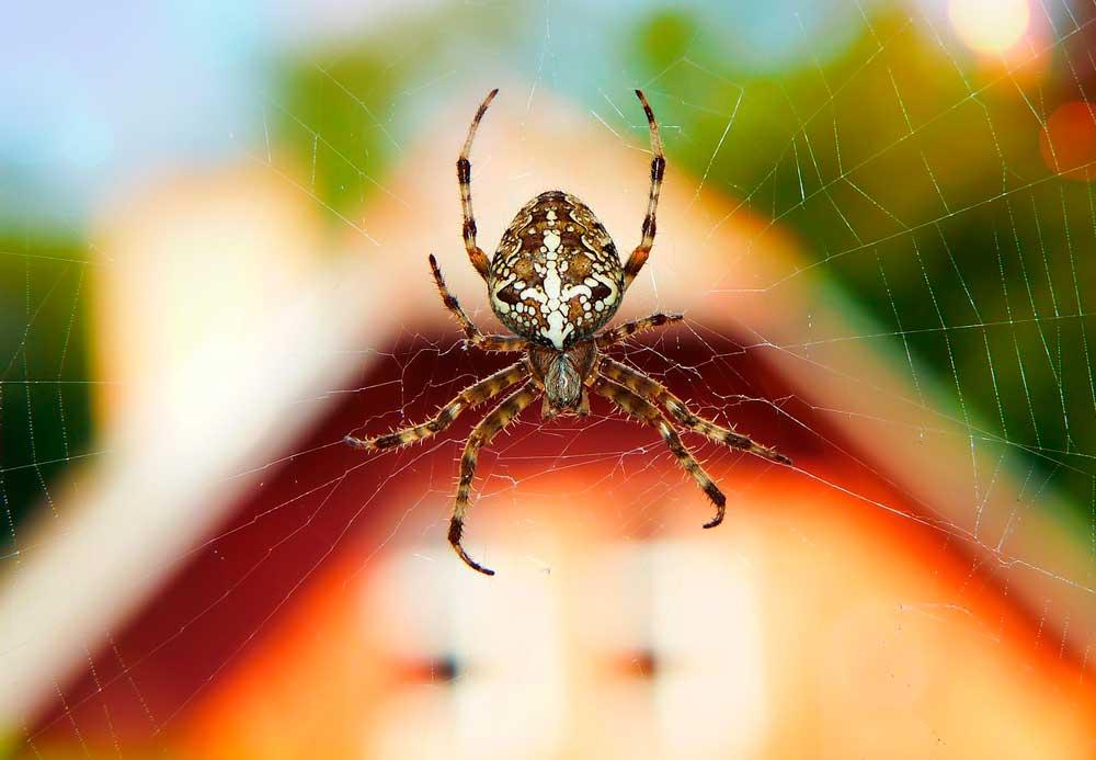 Как бороться с мухами народными средствами