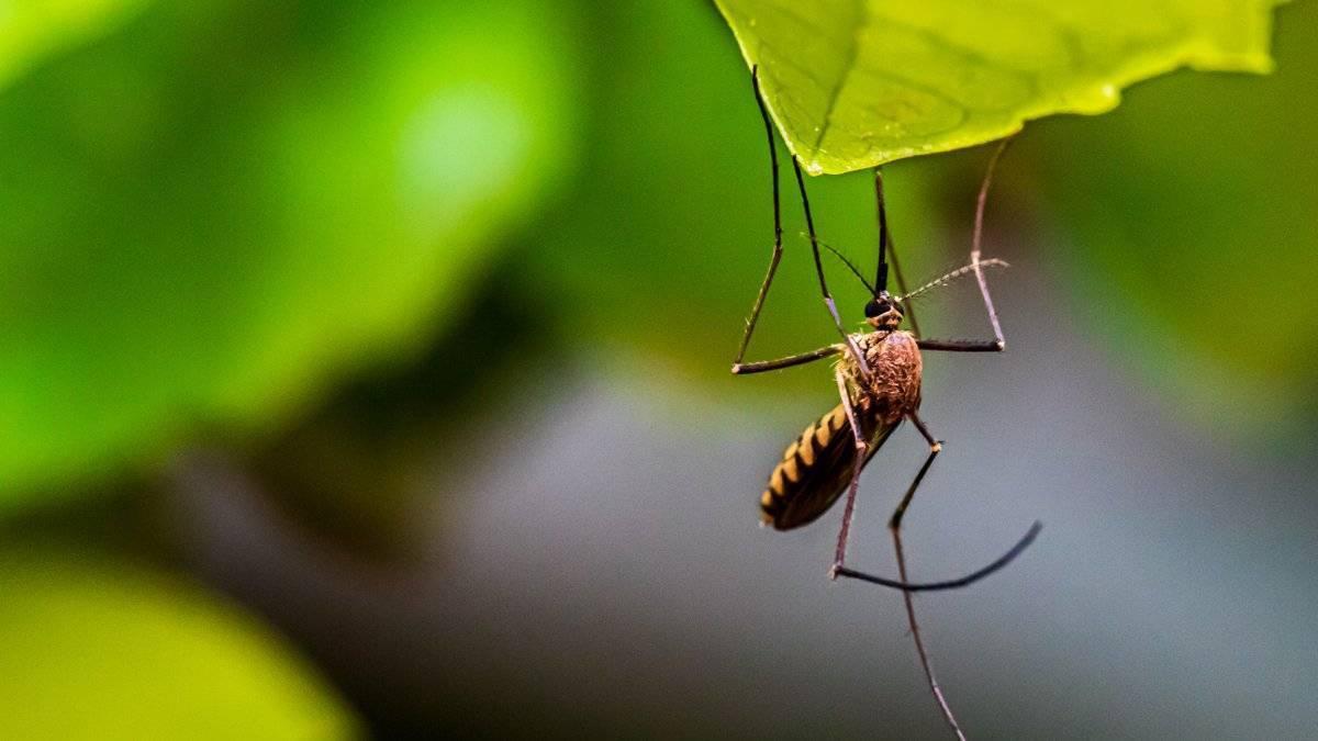 Укус комара и других кровососущих насекомых. как убрать зуд, покраснение и опухоль? как избавиться от оставшихся на коже пятен.