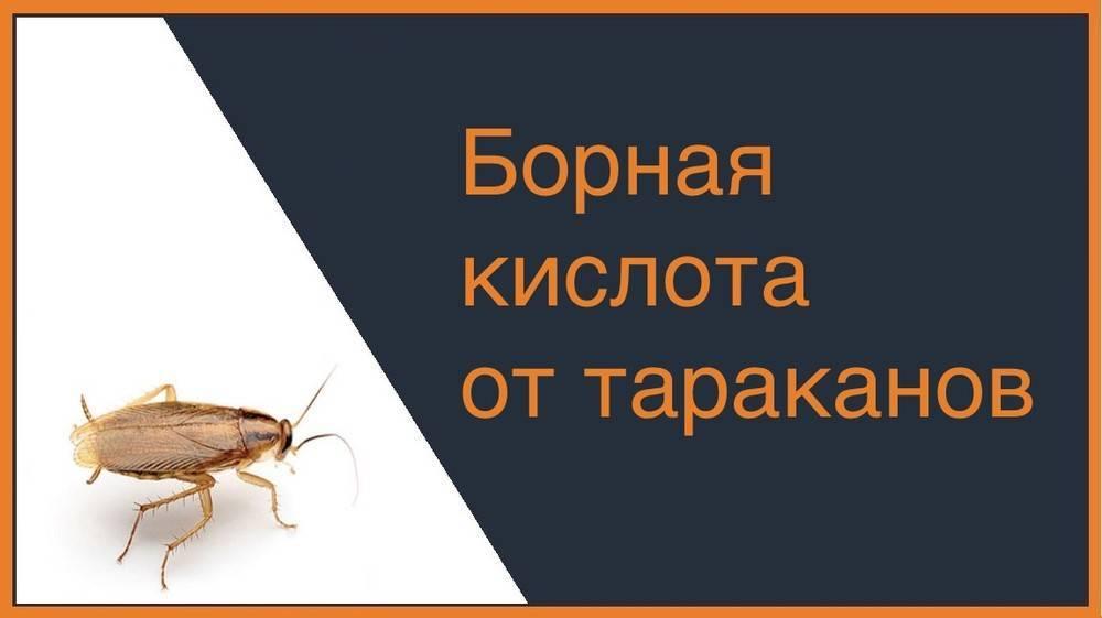 Народное средство от тараканов — борная кислота с яйцом: рецепты приготовления, рекомендации по применению, плюсы и минусы препарата