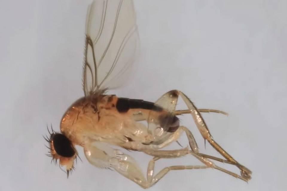 Как поймать муху в комнате: 5 способов