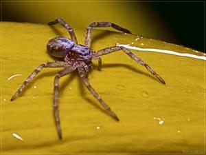 Сколько ног у паука?
