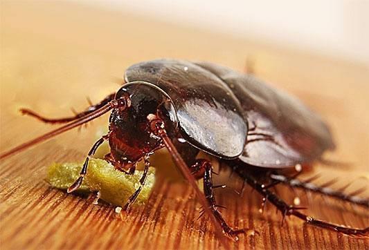 Как найти гнездо тараканов в квартире: где они живут и где прячутся
