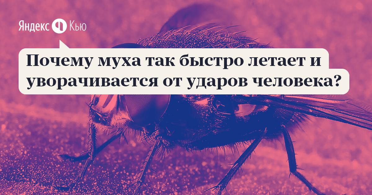 """Как муха держится на потолке? исследовательская работа на тему """" почему муха не падает с потолка"""" атмосферное давление и животный мир"""