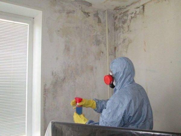 Как избавиться от грибка и плесени на стенах в квартире