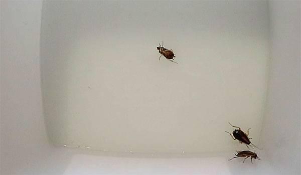 Что можно предпринять, если в квартире завелись тараканы?