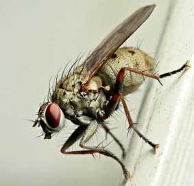 Ученые разобрались, почему муха не падает с потолка. как муха садится и держится на потолок мягкая посадка: детальный разбор