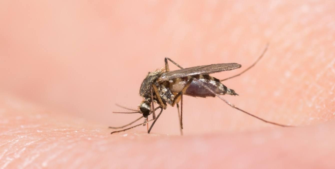 Чем лечить укус комара у ребенка в домашних условиях