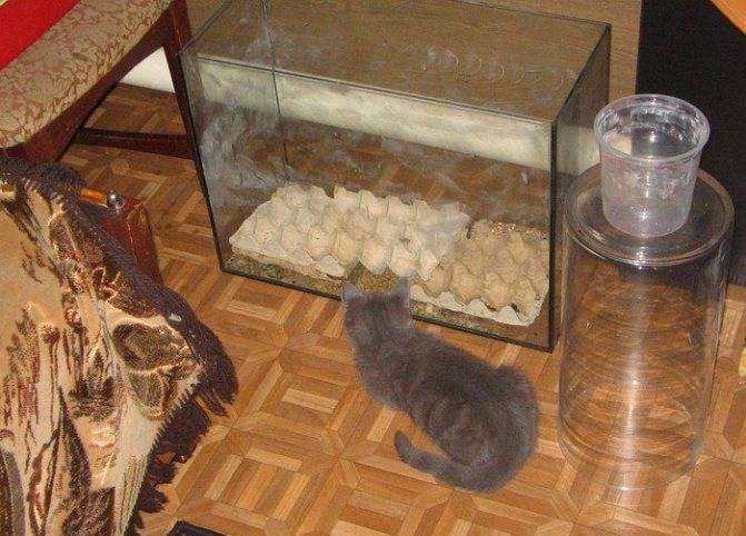 Разведение домашних тараканов на корм домашним животным. мраморные тараканы — как разводить правильно
