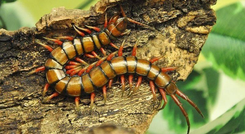 Как избавиться от черных тараканов
