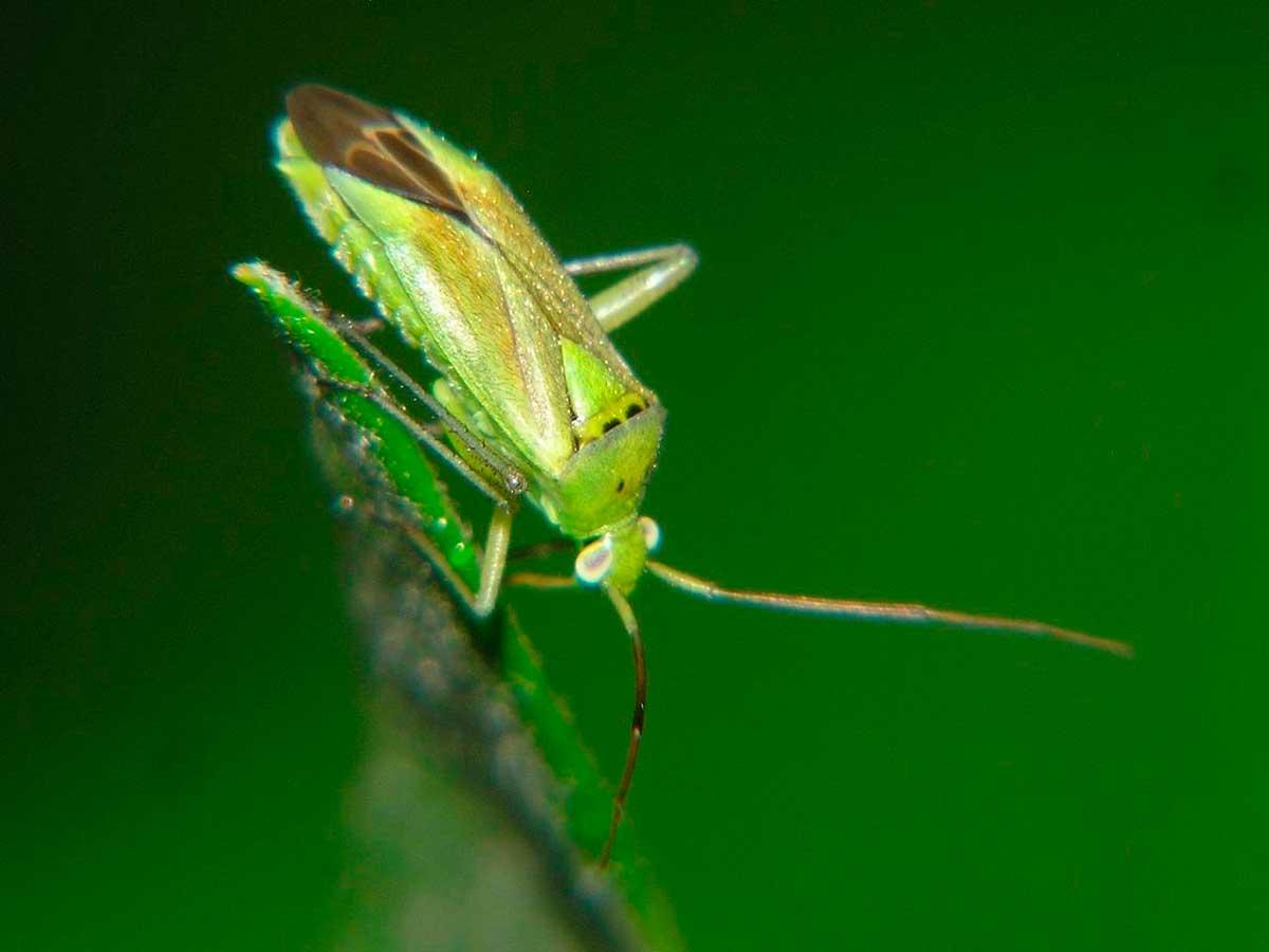 6 разновидностей тараканов и какая у них продолжительность жизни?