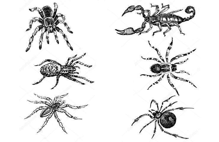 Самые опасные пауки на планете