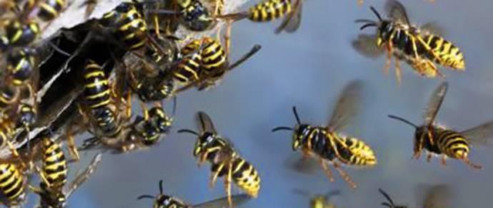 Средства от ос и пчёл