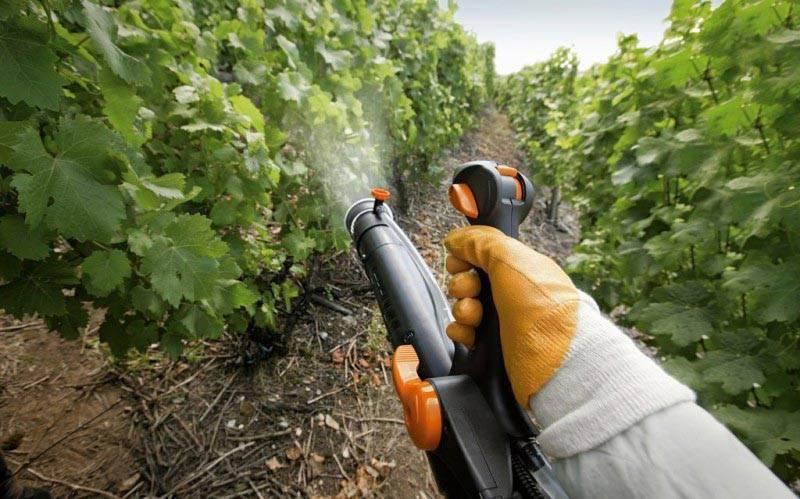 Паутинный клещ на винограде: как бороться, препараты, отзывы