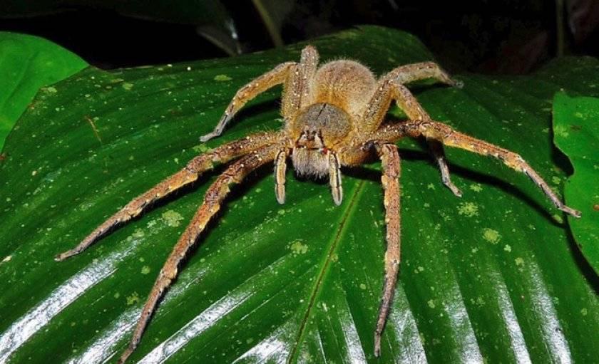 Основные особенности насекомого каракурт и его опасность для человека