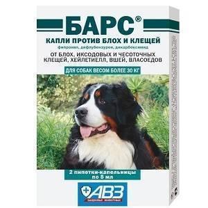 Как подобрать эффективное средство от блох для собак