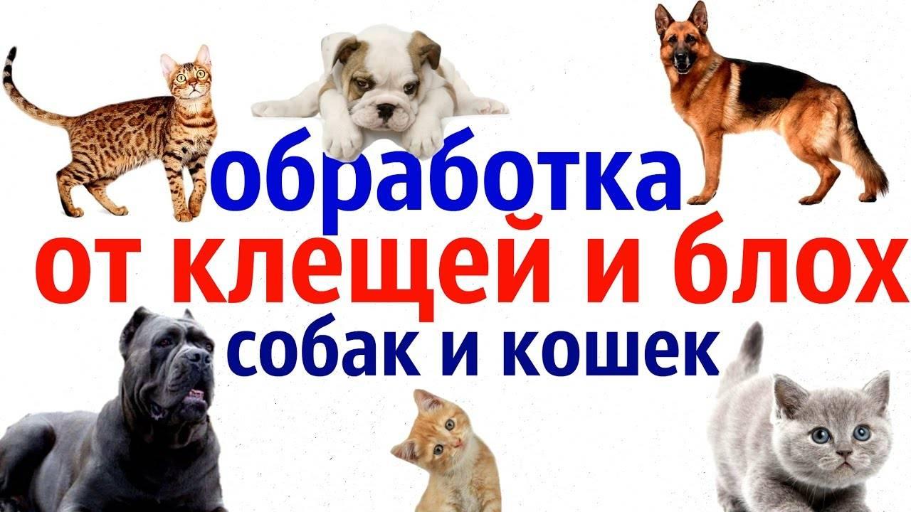 Обработка собак от блох и клещей