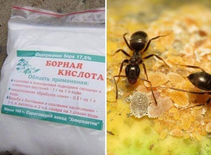 Рецепты как избавиться с помощью борной кислоты от тараканов