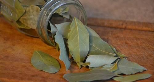 Помогает ли лавровый лист от тараканов?
