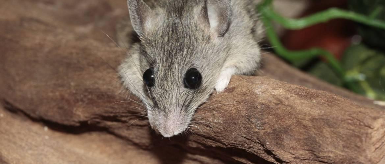 5 способов поймать мышь в квартире