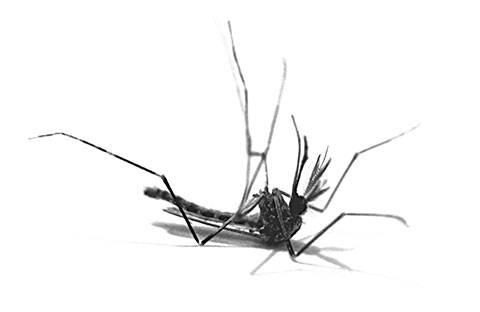 Пластины от комаров: стоит ли использовать?