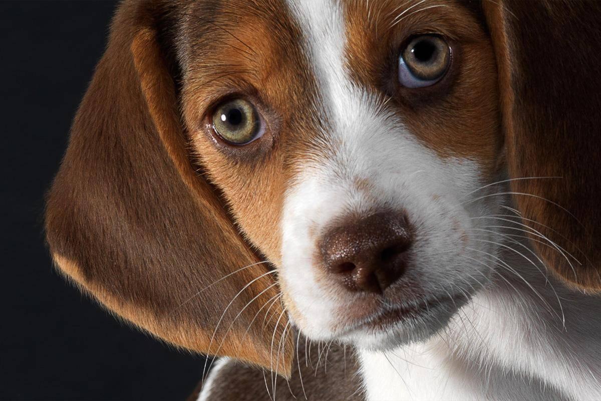 Собаку укусила пчела или оса, что делать?