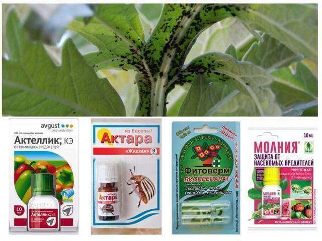 Как бороться с тлей: обзор народных способов и химических препаратов