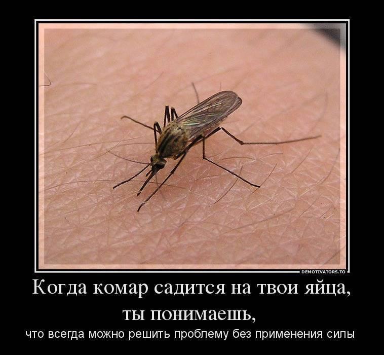 Зачем комары пьют кровь