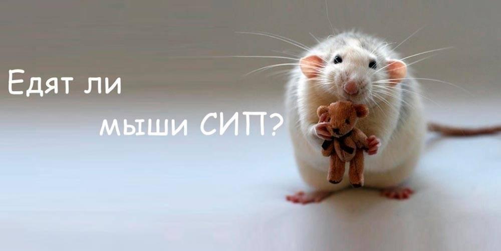Опасны ли мыши для дома из сип-панелей