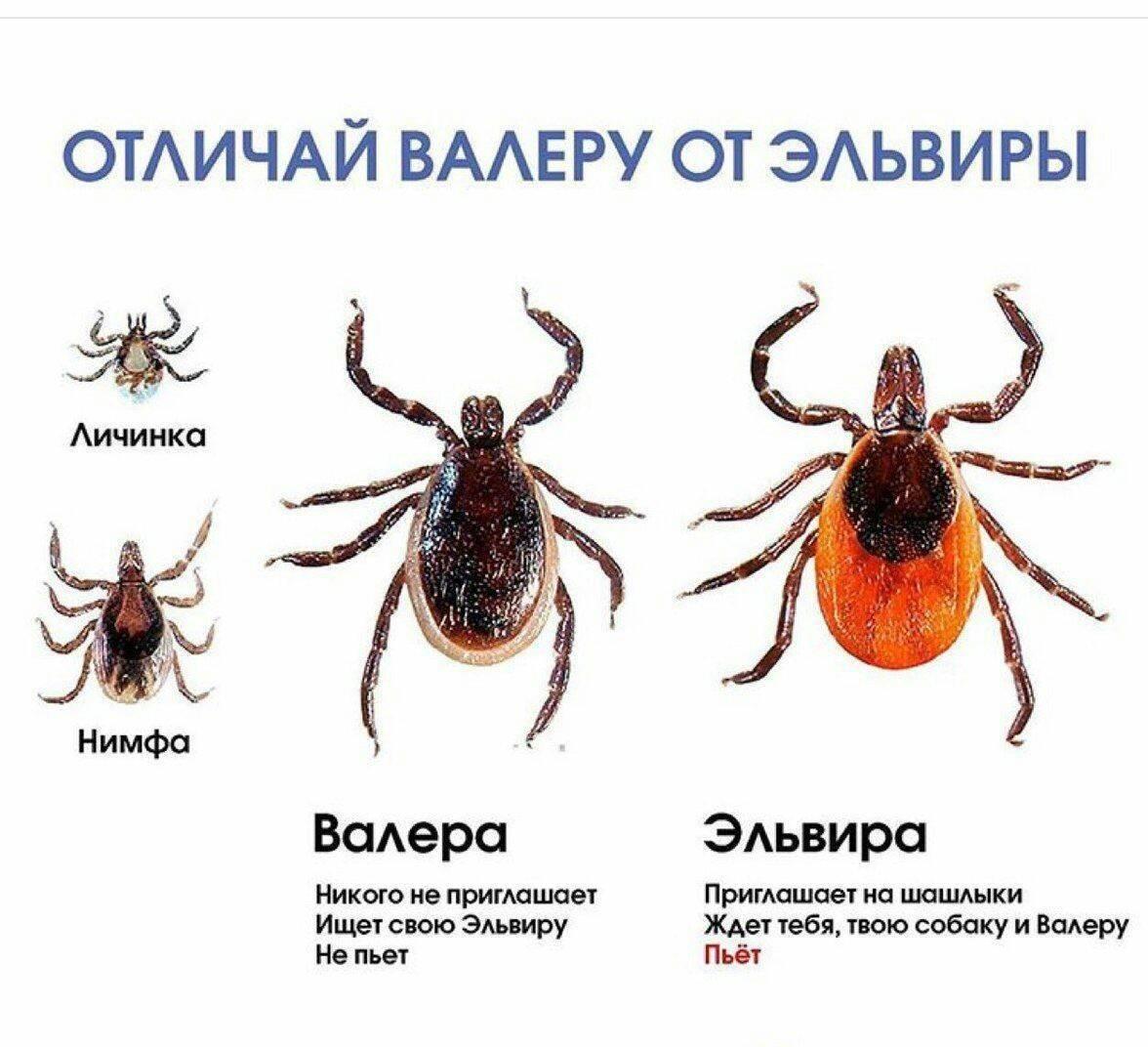 Откуда появились энцефалитные клещи в россии