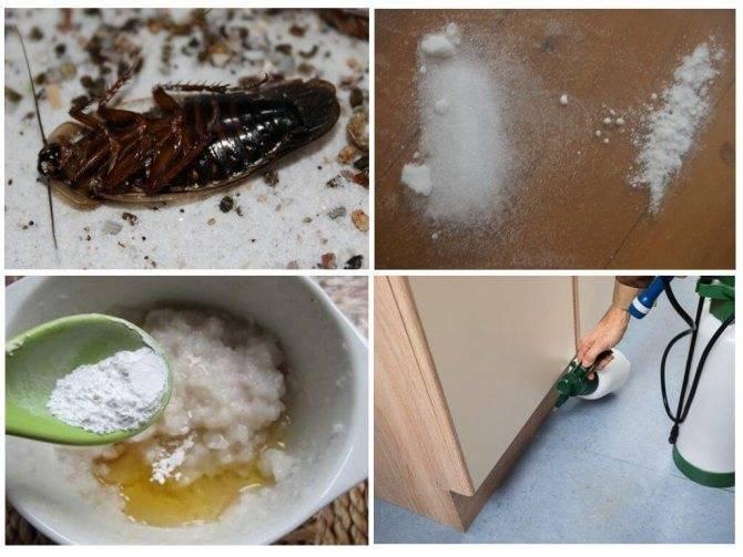 Чистый дом от тараканов: безопасное ли это средство