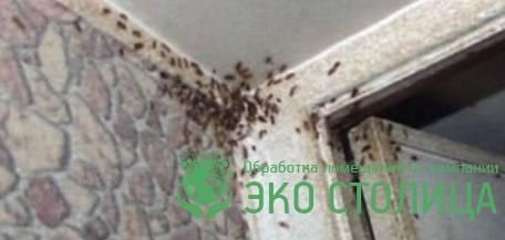 Как быстро избавиться от тараканов в квартире