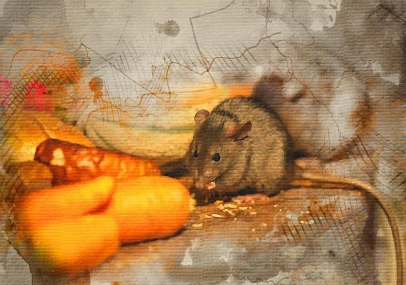 Народная мудрость против мышей