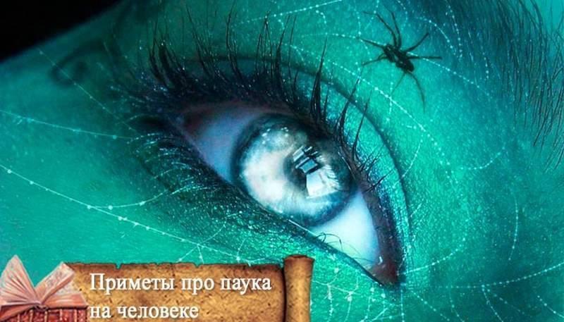 Паук в доме: приметы и суеверия