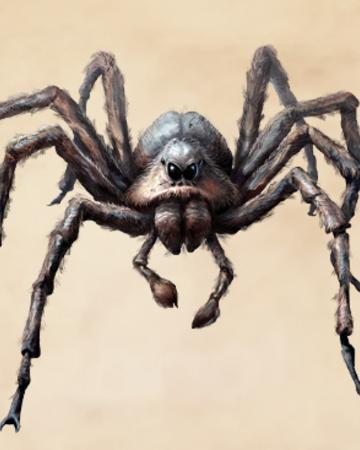 Паук тарантул — удивительно страшный и прекрасный. необыкновенный паук тарантул и многообразие его видов как размножаются тарантулы
