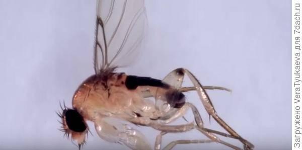 Что будет если съел личинку. что будет, если съесть яйца или личинки мухи. ю.б. «аиф»: как от них защититься