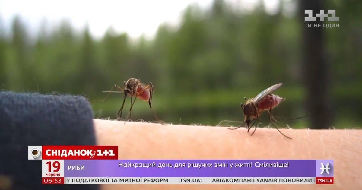 Укусы комара у собаки
