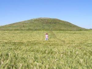 Кобылка сибирская – враг сельских полей на востоке россии