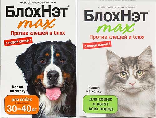 Блохнэт для кошек: мощное средство для выведения паразитов