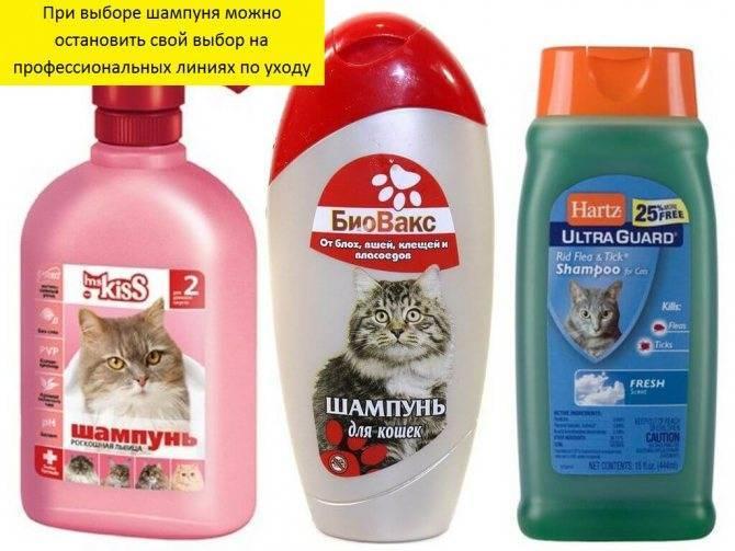 Убрать паразитов начисто! шампуни от блох для кошек