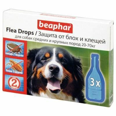 Самое эффективное средство от блох для собак