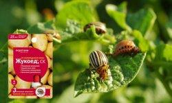 Антижук от колорадского жука на картофеле: инструкция