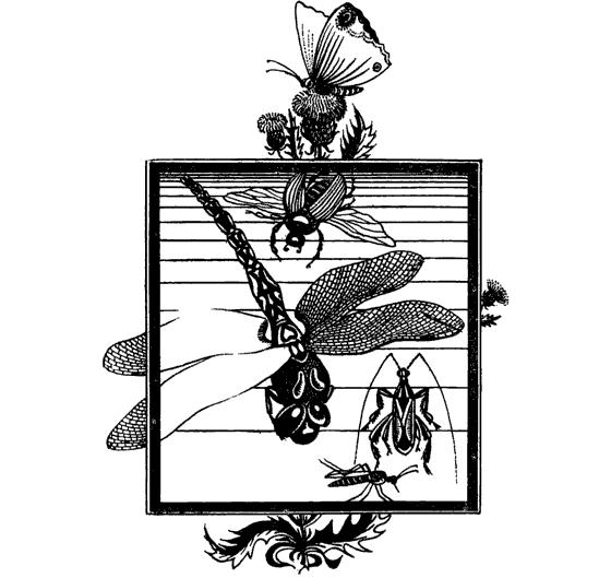 Червец и его особенности: как прогнать вредителя с растений?