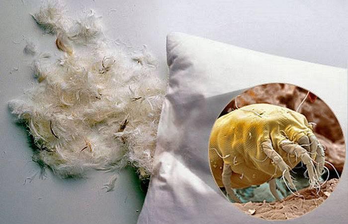 Как избавиться пылевых клещей и пыли в квартире?