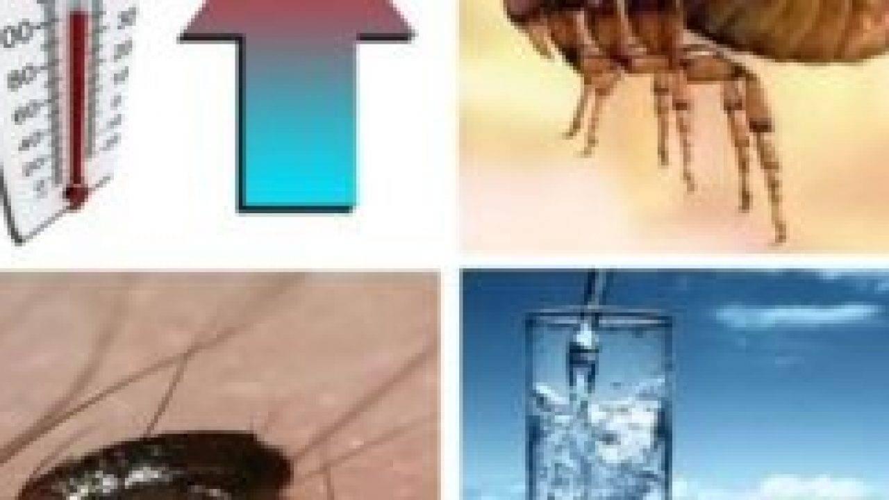 При какой температуре погибают вши и их личинки?