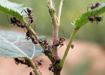 Народные средства от муравьев в доме, на даче, в огороде и саду