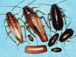 Тараканы в вашем сне: что они предвещают