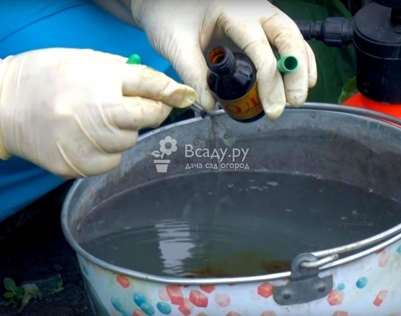 Как избавиться от тли на смородине: эффективные методы